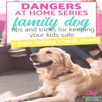 Best Dog Safety Tips for Kids and Parents: Dangers at Home Series Awesome tips and tricks for keepi